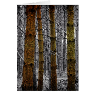 Primitive Western Country Forest Pine Trees Card