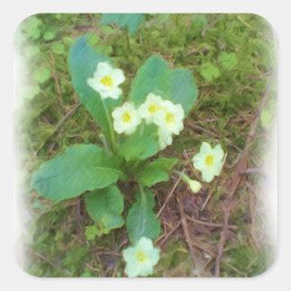 primrose Flower Square Stickers