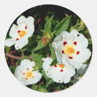 Primrose Flowers Sticker