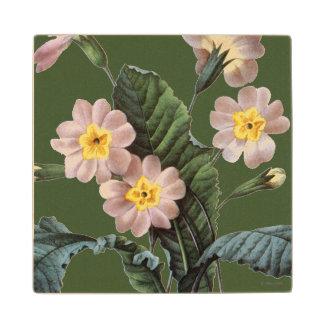 Primrose (Primula Aucalis) Wooden Coaster