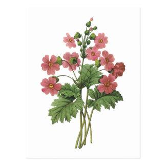 primrose(Primula sinensis) by Redouté Postcard