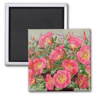 Primrose Seed Packets Magnet