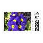 Primrose Stamp