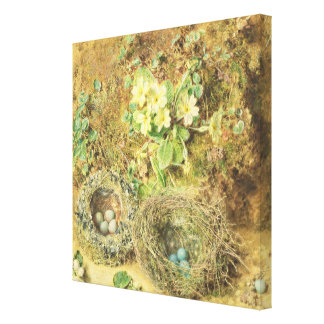 Primroses and Birds' Nests Canvas Prints