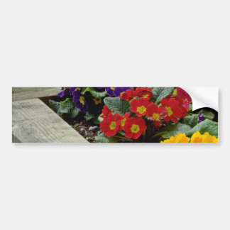 Primroses flowers car bumper sticker