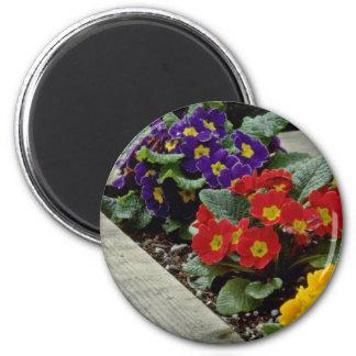 Primroses flowers magnet