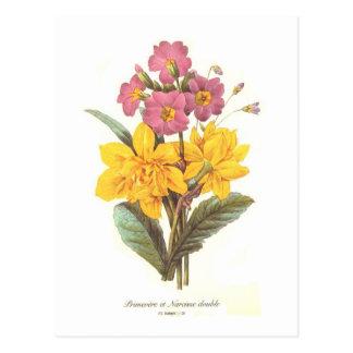 Primula and daffodils postcard