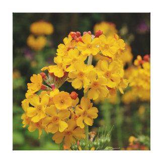Primula floreciente de los candelabros impresiones en lona estiradas