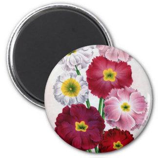 Primula flower vintage design 2 inch round magnet