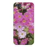 """Primula rosado Malacoides """"hielo rosado"""" (primaver iPhone 5 Cobertura"""