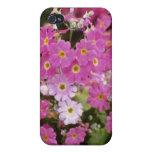 """Primula rosado Malacoides """"hielo rosado"""" (primaver iPhone 4 Carcasa"""