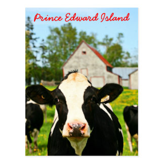Prince Edward Island Dairy Cow Postcard