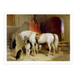 Prince George's Favourites (oil on canvas) Postcard
