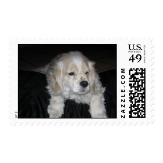 """Prince Louie Cocker Sad Day"" Postage Stamps"