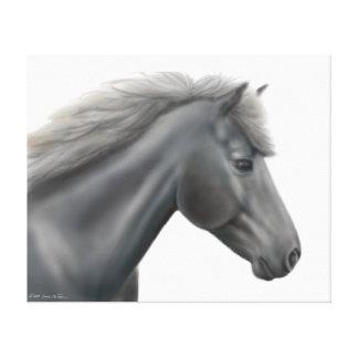 Prince the Shetland Pony Wrapped Canvas