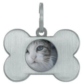 Princesa del hielo el felino salvaje placas de mascota