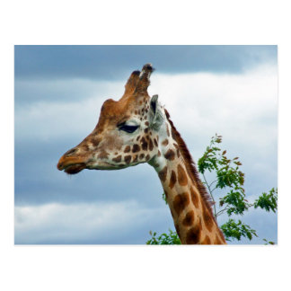 Princess Giraffe Postcard