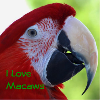 Princess Green Wing Macaw Statuette