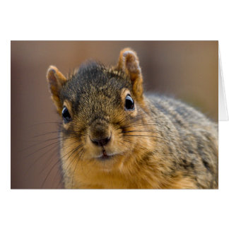 Princess of Fox Squirrel Card