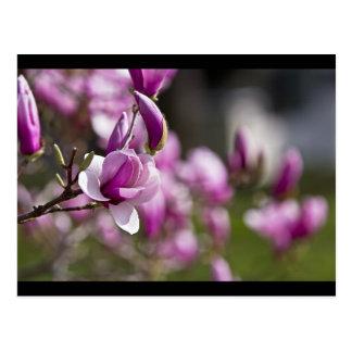 Princeton Purple Tree Flower Postcard