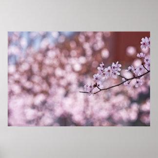 Princeton Tree Flowers Posters