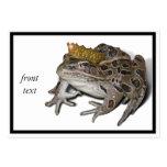 Príncipe de la rana plantillas de tarjeta de negocio