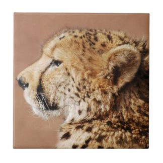 Príncipe del guepardo azulejo cuadrado pequeño