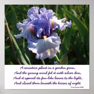 """Print """"A sensitive plant in a garden grew"""""""