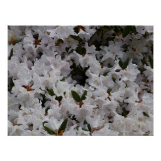 ~Print~ blanco del rododendro Impresiones