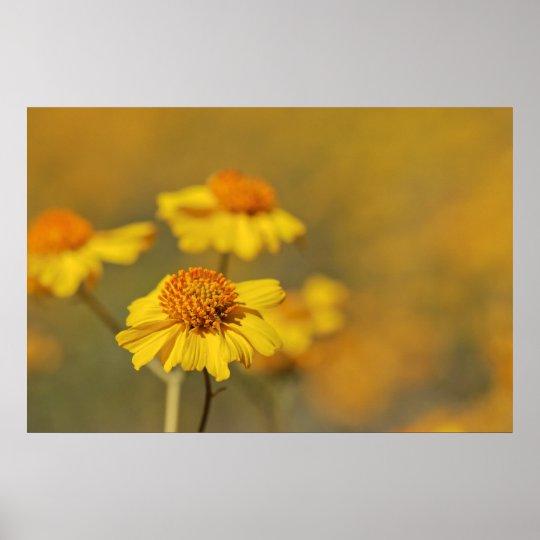 Print: Brittlebush Flowers Poster