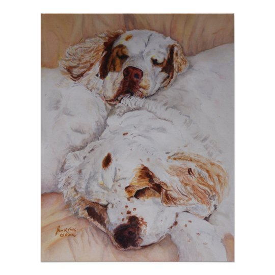 print - Comfort - Two Clumber Spaniels