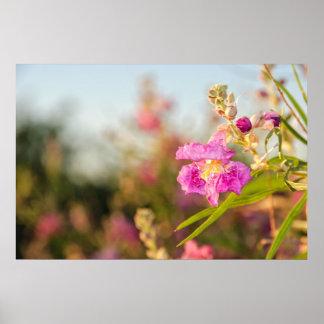 Print: Desert Willow Flower #6 Poster
