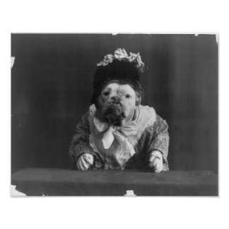 "Print ""Dog dressed in more flower bedecked bonnet"