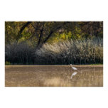 Print: Egret Hunting In Pond 2 Poster