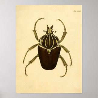 """Print """"entomología i """" póster"""