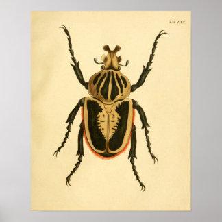 """Print """"entomología II """" Póster"""
