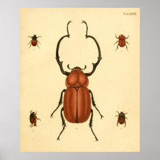 """Print """"entomología III """" Póster"""