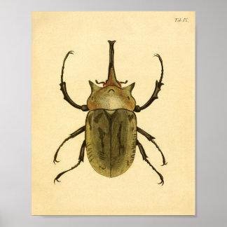 """Print """"entomología IV """" Póster"""