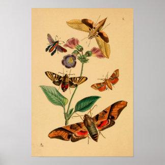 "Print ""entomología v "" póster"