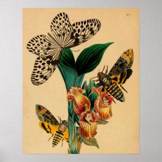 """Print """"entomología VI """" Póster"""