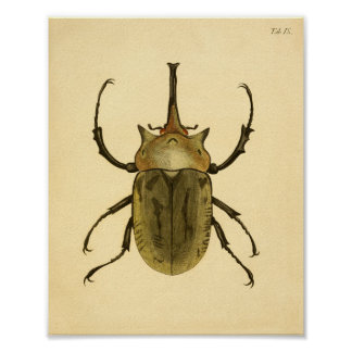 "Print ""Entomologie IV """