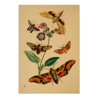 """Print """"Entomologie V """""""
