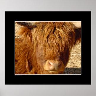 Print - Highland Cattle