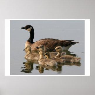 Print / Lesser Canada Goose Brood