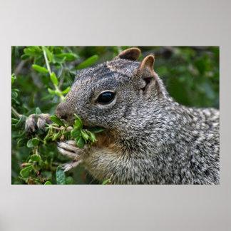 Print: Munchy Squirrel Poster