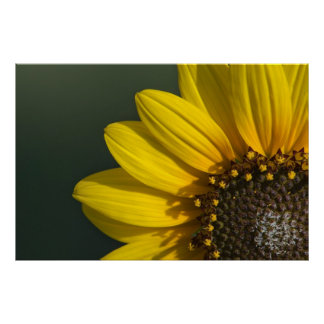 Print: Radiating Sunflower Poster