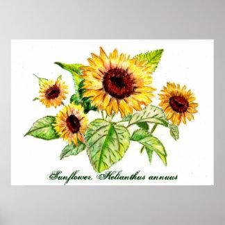 Print, Sunflower Bouquet
