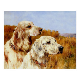 Print: Two Setters by Arthur Wardle Poster