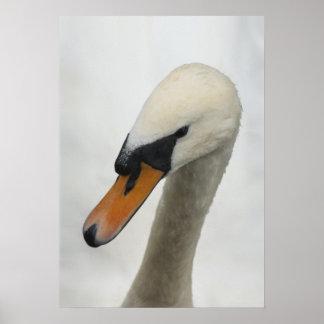 Print - White Macro Swan