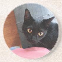 Priscilla cat coaster